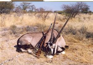 Oryx, odstreljen kalibrom 30-06