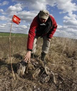 Nova Crnja, 3.marta 2015. - Strucna sluzba LU Nova Crnja u ataru sela Radojevo pronasla je na oranicama zasadjenim psenicom 24 grla srnece divljaci otrovane preparatima za suzbijanje glodara.Upravnik lovista Ivica Palameta, izjavio je da su medju otrovanim grlima srnece divljaci i tri vrlo jaka srndaca. Pored srnece divljaci upravnik Palameta pronasao je i nekoliko otrovanih i uginulih lisica i jednog orla belorepana. - Ovo je sve pronadjeno na samo jednoj parceli od 50 hektara a kolika je stvarna steta i koliko je stvarno nastradalo divljaci znacemo detaljnijim pregledom ostalih delova lovista.FOTO TANJUG/ JAROSLAV PAP/ nr