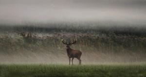 Sombor 18.09.2013.Hladno i maglovito jutro u SRP Gornje podunavlje