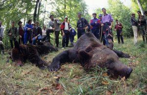 odstrel-medveda